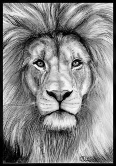 pencil drawings of animals - Google Search