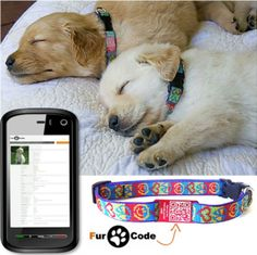 Smart collar with all your dogs info