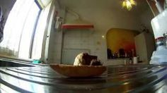 Hilarious : this dog really wants crisp bread ! - YouTube