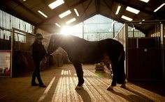 Horses can recognise their owners from their voices and create a mental picture of familiar humans