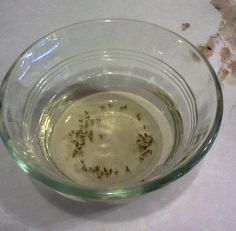 Get rid of fruit flies with these TWO simple ingredients you probably already have in your kitchen. FunCheapOrFree.com #DIY