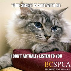 Your secret is always safe with your cat.