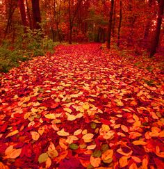 autumn, fall, finland, nature, orange, red - inspiring picture on Favim.com