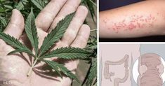 """Hemphas been called a plant of """"major economic importance,"""" as it grows like a weed, yet can be used in the production of food, personal care products, textiles, paper, and even plastic and construction materials."""