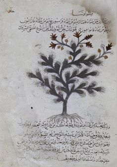This page has survived from an Arabic translation of the <I>Materia Medica</I>, a treatise on the use of the medicinal herbs and plants written in the first century by Dioscurides, a Greek physician living in Asia Minor. The original work was a favorite text of the Abbasid caliphs, the temporal successors of Muhammad; from the eighth century on, they had several copies made for their libraries in Baghdad. The schematically drawn plants, rendered in black, sepia, and green, are realistic…