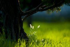 candle.. by Photomeca .., via 500px
