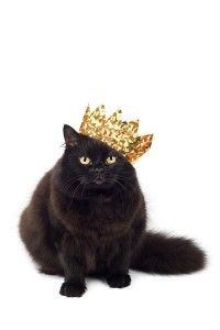 """""""The cat is a regency gentleman--elegant of pose, exquisite of manner, with spotless linen, an enthusiasm for bare-knuckle fights, rampaging love affairs, duels by moonlight, and the singing of glees."""" --Pam Brown"""