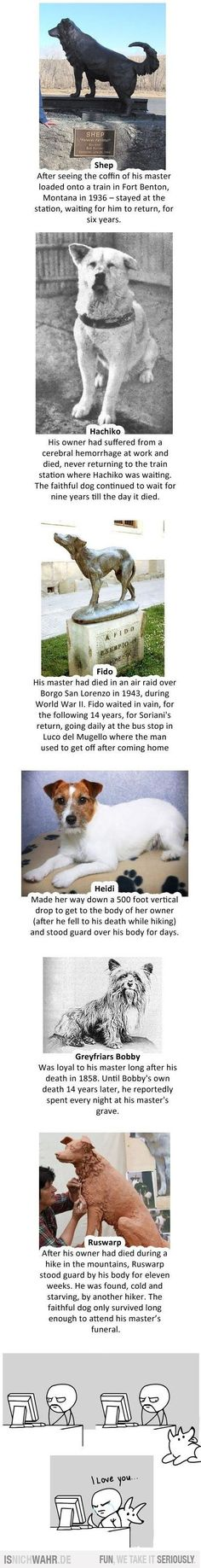 These kind of stories always break my heart, what must they be thinking when their owners don't return? It's so sad. Cuddle your pets <3