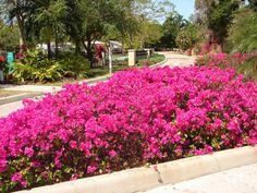 bougainvillea-garden-chandigarh-timings.jpg (624×468)