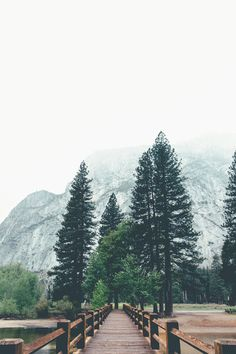 misty mornings: just us + the trees