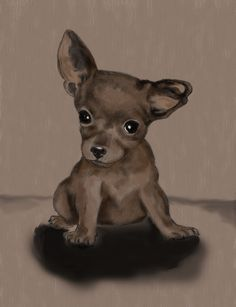 Colored Copy Of My Chihuahua Drawing I Did Earlier Tonigt Photo:  This Photo was uploaded by sesepets. Find other Colored Copy Of My Chihuahua Drawing I ...