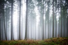 In the foggy heartland of Ukraine lies this beautiful forest with captivating enchantment. The dusky greens of the leaves on the trees and the moss covered ground is casted over by the grey mist that engulfs the scene. Perfect for a moody or relaxed look for your walls. The soft palette of colours work well...  Read more »