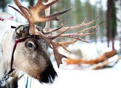 Office of Santa Claus.  Leponia, Finlandia...