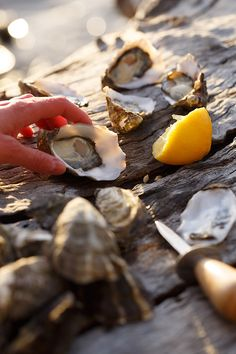 Shucked oysters.