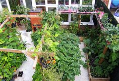 how to take advantage of small spaces and get lots of vegetable and fruit varieties. He also gives advice on how best to grow specific plants.