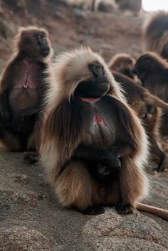 JUST GO AND EXPLORE   Primates, Rare Animals, Animals And Pets, Strange Animals, Beautiful Creatures, Animals Beautiful, Ape Monkey, Baboon, Mundo Animal