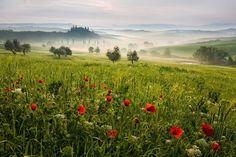 Nebbia colori e... Toscana...