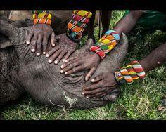 "CATEGORIA: NATURALEZA World Press Photo 2015. Ami Vitale de Estados Unidos con la fotografía ""Orphaned Rhino"""