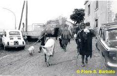 :Materdomini di Caposele (AV), 1973, Festa di San Gerardo