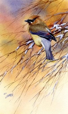 Cedar Waxwing by Joe Garcia Watercolor. The background complements the main subject nicely. Watercolor Bird, Watercolor Animals, Watercolor Paintings, Watercolors, Gravure Photo, Bird Drawings, Animal Paintings, Bird Paintings, Wildlife Art