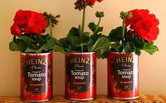 Red geraniums planted in tomato soup cans. Thank you Andy Warhol for the inspiration!