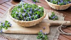 Health Advice, Parsley, Pesto, Herbalism, Succulents, Herbs, Healthy, Plants, Food