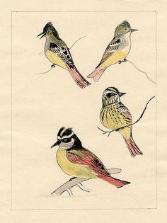 antique bird drawing via @Etsy
