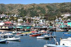 We had so much fun visiting Catalina Island! We stayed for 5 days.