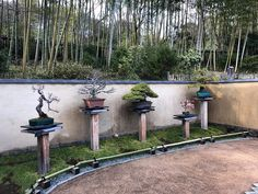 Japanese Maple Garden, Japanese Gardens, Courtyard Pool, Green Valley, Bonsai Garden, Garden Stones, Small Trees, Botanical Gardens, Wind Chimes