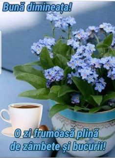 8 Martie, Good Morning, Plants, Buen Dia, Bonjour, Plant, Good Morning Wishes, Planets