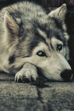 worldfam0us:  Blue Eyes | by Imaad Griffiths