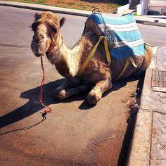 Koukali na nás všude! :) #morocco #maroko #afrika #africa #cestovani #cestujeme #dnescestujem #travel #travelling #traveling #cute #animal #sbatuzkem