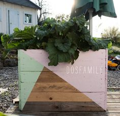DIY Flower boxes with rhubarb in Jenny´s garden