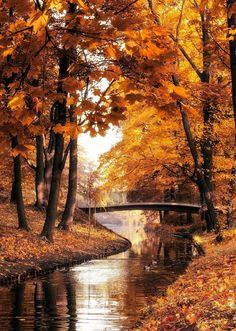 warm autumn by Konrad Demczuk / Fall Pictures, Nature Pictures, Autumn Photos, Autumn Photography, Landscape Photography, Halloween Photography, Natur Wallpaper, Autumn Scenes, Fall Wallpaper