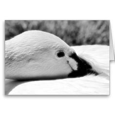 """A blank 7x5 greeting card featuring the image """"Sweet Reverie"""" by artist and photographer Rodney Keith Richardson. This card can be customized."""