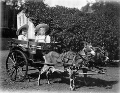 Olga (right) and Tatiana in a cart drawn by a pair of mountain goats, 1890's.