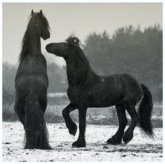 When I have my own place ill also have a couple draft horses =)