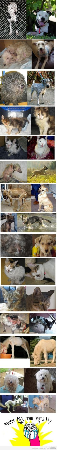 Animals Before and After ~ Great food, fantastic homes and LOVING GUARDIANS make this happen! <3