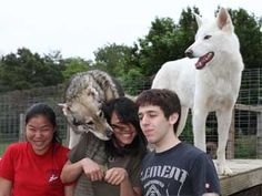 Howling Woods Wolf Sanctuary -Our Facility