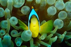 Why hello there! Creatures of the Coral Reef slideshow from MSN