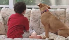 Rescued Pit Bull Helps Autistic Boy