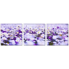 Shop for Gallery Direct Anna Omelchenko's 'Daisy Field' Canvas Gallery Wrap Art…