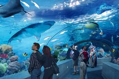 OPENING SUMMER 2013, FINALLY! Ripley's Aquarium of Canada will be a 12,500 square-metre (135,000 square-feet) world-class family attraction with more than 5.7 million litres (1.5 million gallons) of water depicting marine and freshwater habitats from around the world.