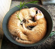 Sleeping In A Pot