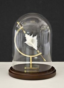 White Shell in Glass Dome... WOW.. like an armillary