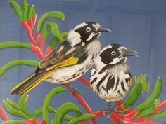 Up close with the Honeyeaters in the Kangaroo Paw. Kangaroo Paw, Australian Birds, Coloring, Carving, Prints, Painting, Art, Art Background, Wood Carvings