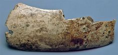 Fragment of a mammoth tusk showing a mammoth.     Mammoth tusk; carved, polished and engraved. 83 x 32 mm   Maltinsko-buretskaya Culture. 23 000 - 19 000 BP  Malta Site (Excavations of M.M. Gerasimov, 1928-1930), Siberia, the River Belaya, near Irkutsk, Russia