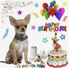 New Ideas aniversário mulher feliz - Birthday Cakes - Aniversario Happy Birthday Chihuahua, Happy Birthday Emoji, Happy Birthday Pictures, Happy Birthday Wishes, Happy Birthdays, Animal Birthday, Dog Birthday, Boy Birthday Parties, Birthday Cakes