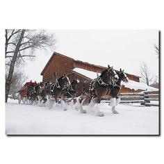 Clydesdales - Snowing in front of Barn Photographic Print on Wrapped Canvas