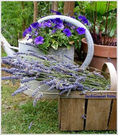 ISA's Garden - Lavender time in my garden © Jardinement Vôtre